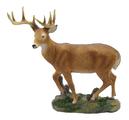 Buck Deer Standing